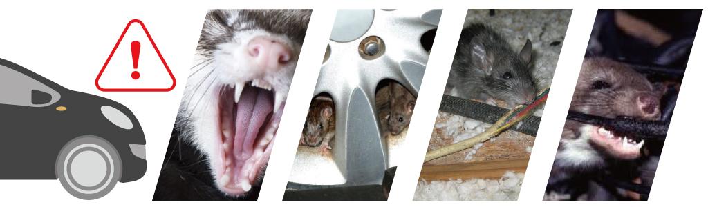 11n8-01-rodentcars