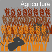 1b11-01-1-rodent-agriculture