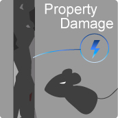 1b11-01-2-2-rodent-damage