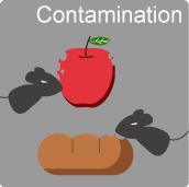 1b11-01-5-rodent-contamination